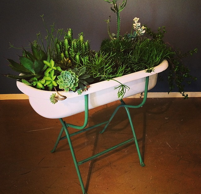 "Vernon Caldera, ""Houston"", 2014, Succulents, bathtub"